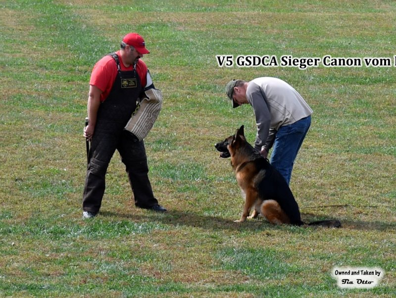 Our stud, V5 (GSDCA) Sieger Canon vom Heralmaborg guarding.
