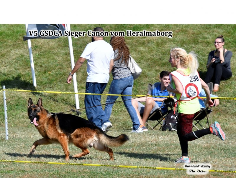 2016 GSDCA Sieger Show in St. Louis, Missouri
