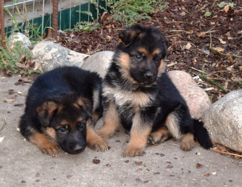 Hagen and Leska Female A and Male B on 10-17-15