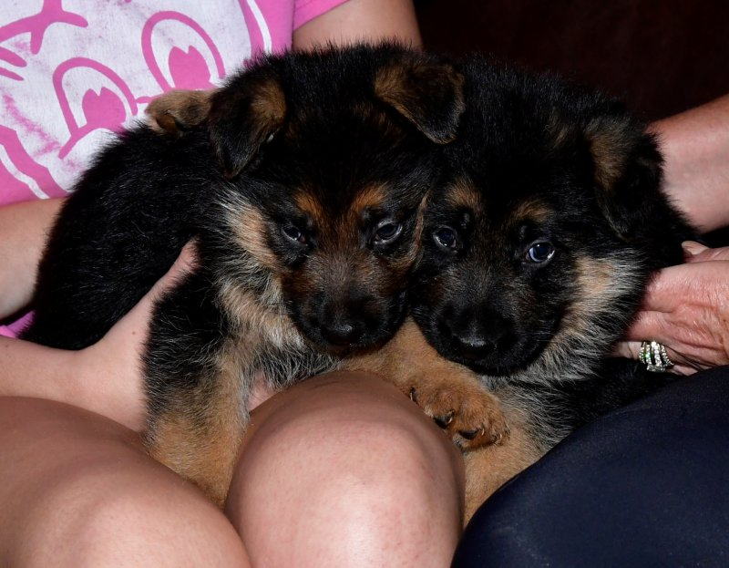 Nix and Sadie Male B & Male A. Taken left to right on July 04, 2017