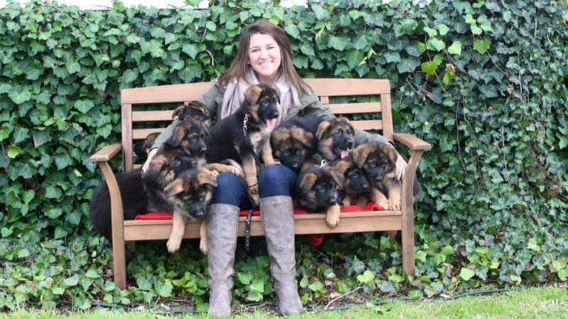 Sydney my little College student in her high school graduation picture with her Xena puppies. She was holding 11 puppies. This is the Karson and Xena 2015 litter!
