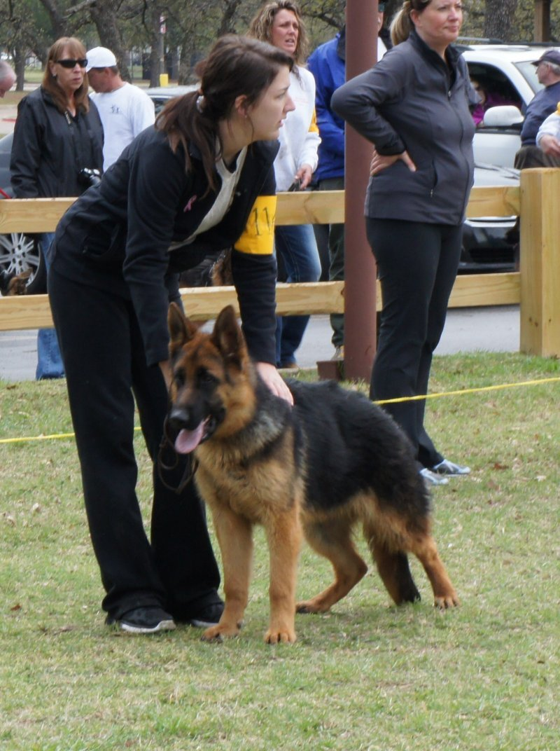 Anina von der Otto 7 months shown by Sydney, 6 to 9 month puppy class. Won 1st place. Pic taken 03-23-13