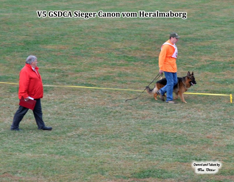 V5 (GSDCA) Sieger Canon vom Heralmaborg IPO2, KKL 1a.  He is a 3X VA Randy vom Leithawald son