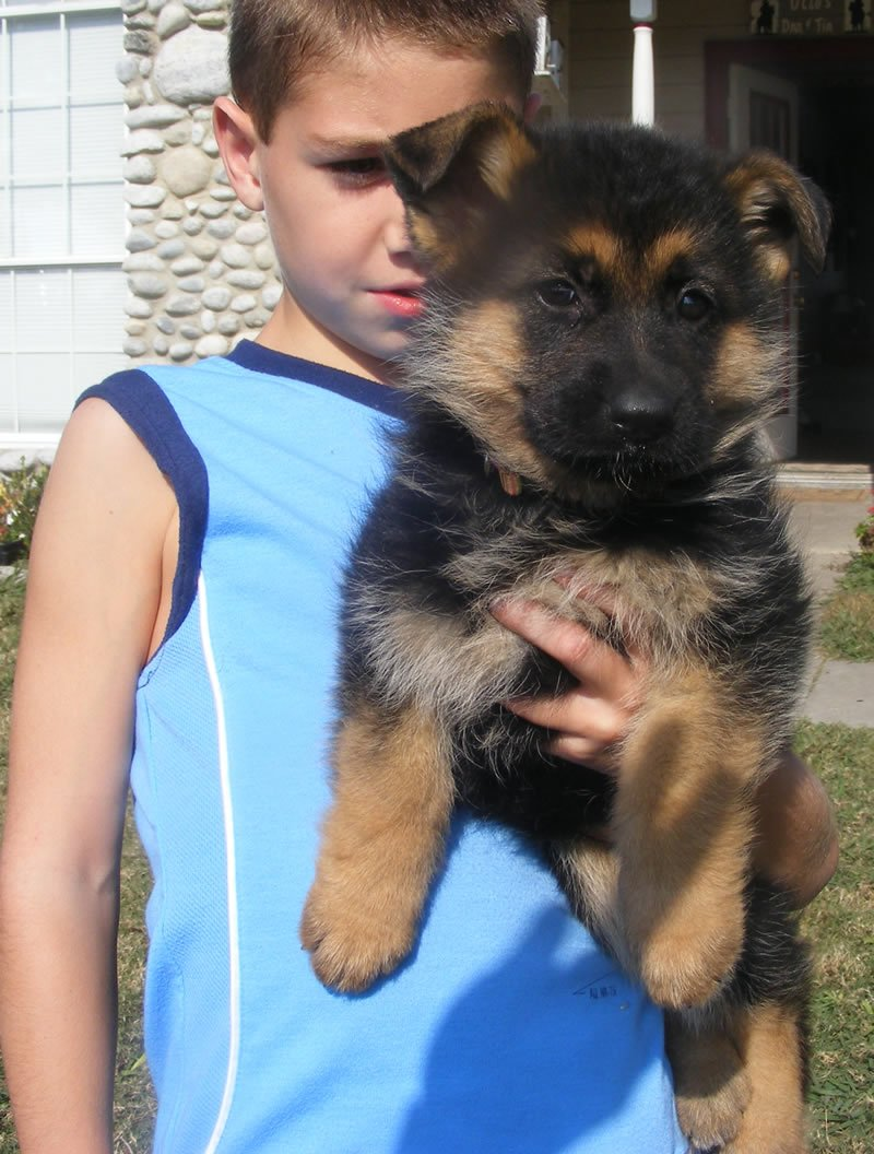 Chance, my grandson with one of Daffi puppies in 2007