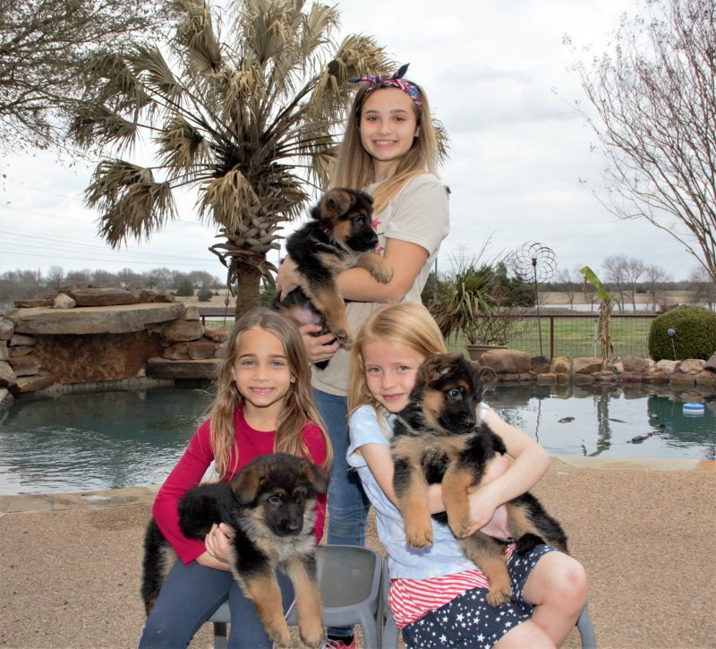 V Aaron vom Warmetal and Yori von der Otto puppies in March 2021. The Maggie and Bryanna family. My employees children loving our babies!