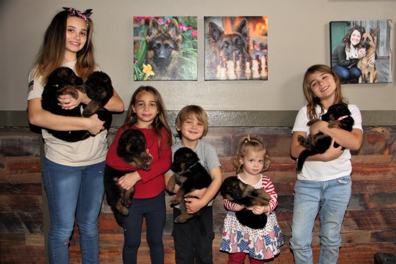 Sindbad and Emma Pups 2021. Meet the heart of our business Maggie, Bryanna and our extended family, their children!