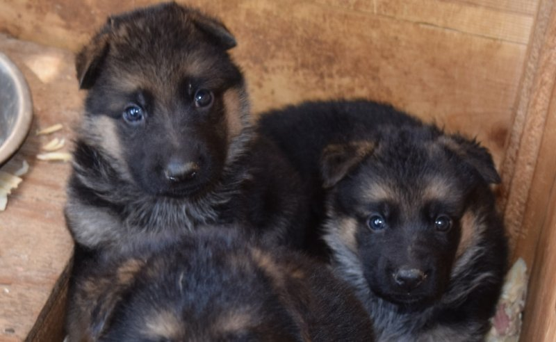 Hagen and Leska Female A and Female B on 10-18-15